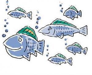 fish for web